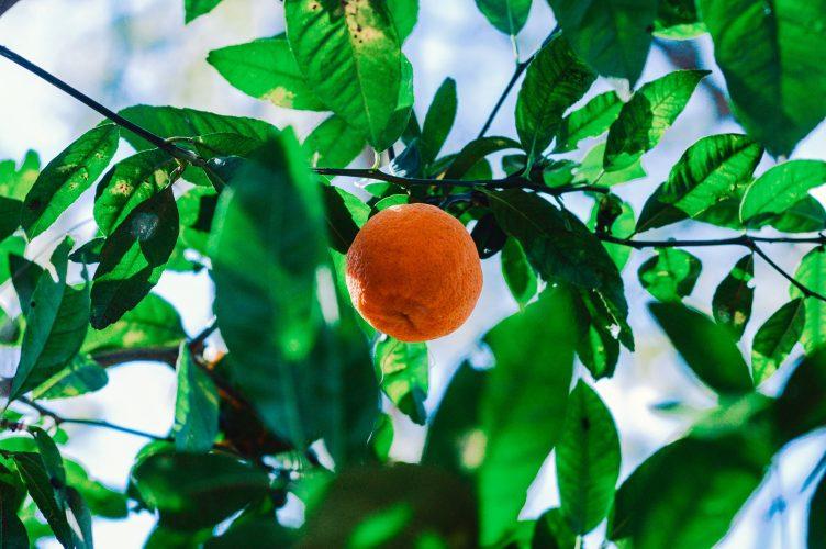 tangerine bank recipes